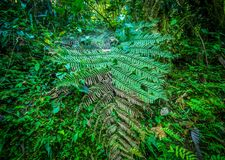 Close up of a beautiful view of the nature inside the forest, with some ferns, in Mindo. Ecuador Royalty Free Stock Photography