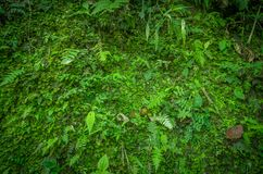 Close up of a beautiful view of the nature inside the forest, with some ferns, in Mindo. Ecuador Stock Image