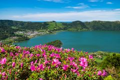 Close up beautiful view of pink flowers to background lake. Azores, Sao Miguel, Portugal. stock images