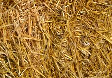 Straw texture as an autumn nature background. A close-up beautiful view to straw heap texture as an autumn natural background in a sunny day royalty free stock image