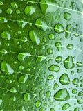 Close up beautiful water drops are on the green leaf Stock Photo