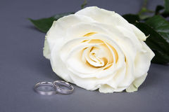Close up of beautiful white rose flower and wedding rings over g. Rey background Stock Photography