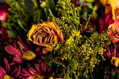 Wilting and Drying Fall Colors Bouquet royalty free stock photo