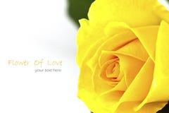 Close up of beautiful yellow Stock Photography