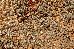Close up bee farm Stock Images