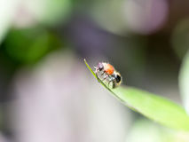 Close up bee on grass leaf Stock Photos