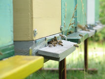 Close-up of beehive entrance. With busy bees in front Royalty Free Stock Images
