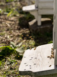 Close up of bees flying in and Out of their hives Royalty Free Stock Photography