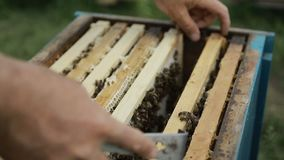 Close up of bees in a swarm a hive stock video footage