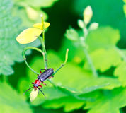 Close up of the beetle sitting on the leaf Royalty Free Stock Photos