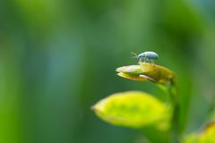 Close up of beetle sitting on plant Royalty Free Stock Photography
