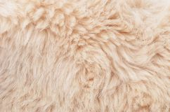 Textured synthetical fur background. Close up of beige synthetical fur textured background Royalty Free Stock Photos