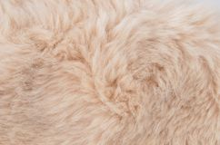 Textured synthetical fur background. Close up of beige synthetical fur textured background Royalty Free Stock Image