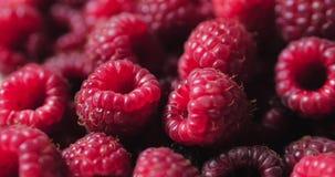 Close up berry. Fresh, juicy raspberry background, ripe. Macro red raspberries fruit. Fresh raspberry fruits as food. Background. Healthy food organic nutrition stock video footage