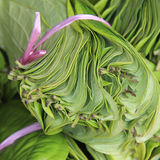 Close up betel leaf on the market. Shallow depth of field Stock Image