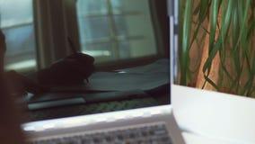 Close-up, bezinning in het laptop scherm Bebouwd schot van hand die de bedrijfs van de vrouw iets schrijven terwijl het gebruiken stock videobeelden