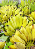 Close up big banana Royalty Free Stock Images