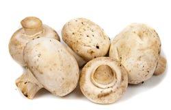 Close-up big champignon isolated Royalty Free Stock Photos