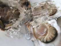 Close up big fresh raw oyster. Close up big fresh raw oyster on white dish Royalty Free Stock Image