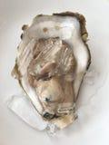 Close up big fresh raw oyster. Stock Photos