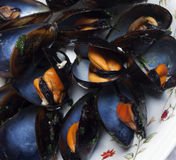 Close-up of big group steamed fresh mussels. Mediteranea Stock Photo