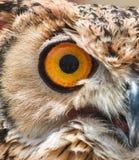 Close-up of the eye of an Eurasian / European eagle-owl. Close-up of the big orange eye of an Eurasian / European eagle-owl stock images