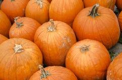 Close up of Big Orange Pumpkins Stock Image