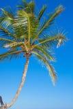 Close-up of a big palm tree on background blue sky Stock Photo