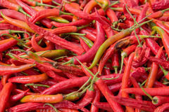 Close up big red chili pepper background. Royalty Free Stock Photography