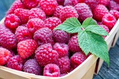 Close-up of big ripe raspberries in a wooden basket. The Close-up of big ripe raspberries in a wooden basket Stock Photos