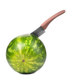 A close-up of a big round green striped watermelon on the white background, which  is being stabbed with a huge knife. Stock Photo