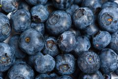 Close up of bilberry Royalty Free Stock Photos
