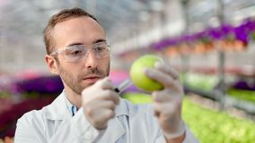 Close-up biologist scientist injecting ripe apple using syringe making testing genetically modified