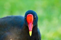Close Up Bird. A close up shot of a bird's head Royalty Free Stock Image