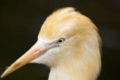Close up of bird head Stock Image