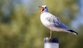 Close-up of Bird Perching on Wood Royalty Free Stock Images