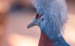 Close up of birds eye Stock Photography