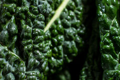 Close up on black cabbage leaves Stock Photo