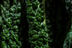 Close up on black cabbage leaves Royalty Free Stock Photography