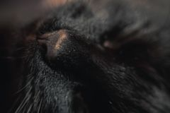 Close up black cat nose. Macro muzzle detail. Shallow depth of field. Selective focus stock images