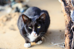Close up black cat sit on sand Royalty Free Stock Images
