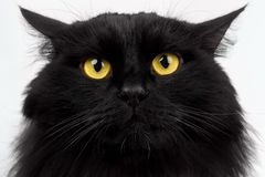 Close-up Black Cat with Yellow Eyes Stock Photography