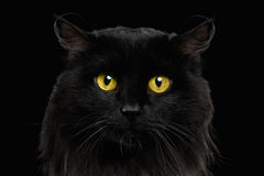 Close-up Black Cat with Yellow Eyes Stock Image