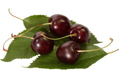 Close Up of Black Cherries Royalty Free Stock Photos