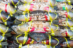Close up Black Crab or Serrated Mud crab Stock Photos