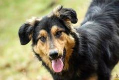 Close up of black dog face Stock Image