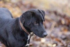 Close-up Black dog stock photos