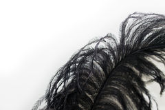 Close-up of Black feather isolated Stock Photography