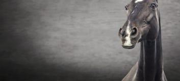 Close up of black horse portrait on dark textured background. Banner stock image