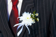 Close-up black jacket groom on their wedding day with a red tie and lapel buttonhole. Royalty Free Stock Photography
